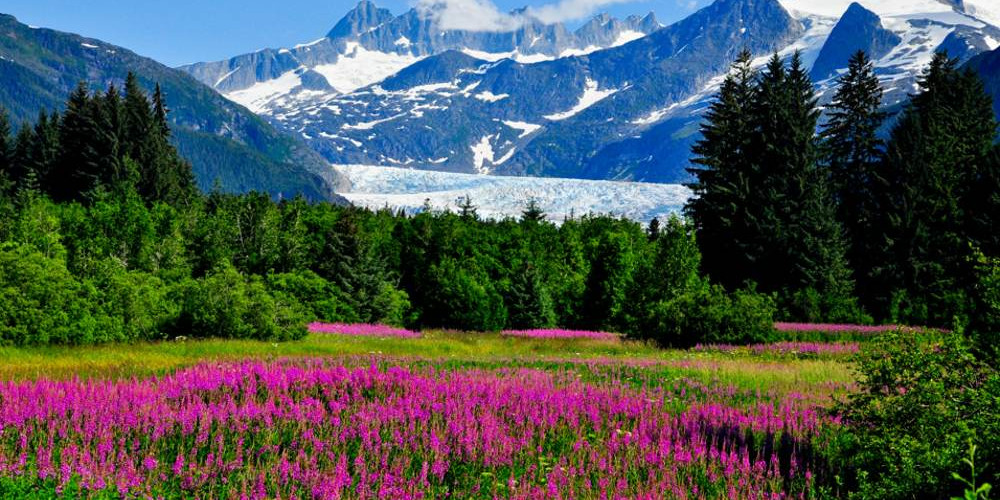 USA-Alaska-Mendenhall Glacier Viewpoint